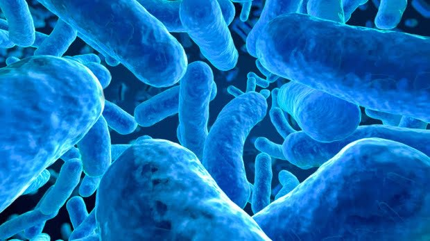 microbiome body bacteria