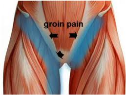 where is your groin area located